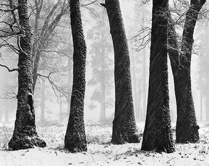 008_Trees_Blowing_Snow_500[1]