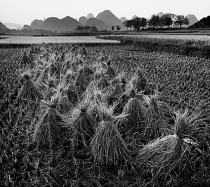 012_Rice_Fields_Dusk_5SB