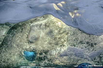 09_Resnick_Greenland_2018