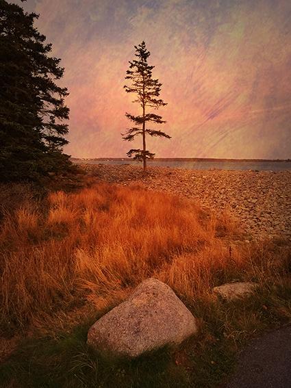 17_2014_Acadia_IMG_7806