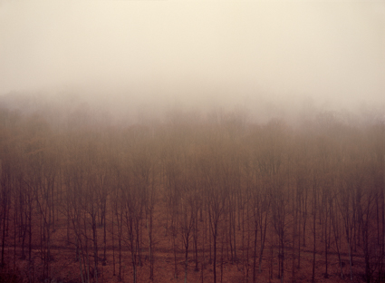 Selva Obscura I