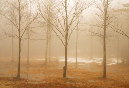 Selva Obscura VI